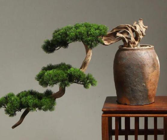 松树盆景如何造型 可以造型的松树种类有哪些