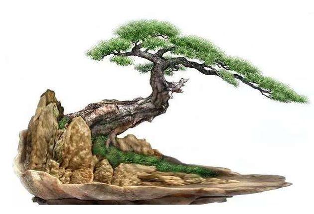 造型松树盆景的养护及修剪技巧是什么